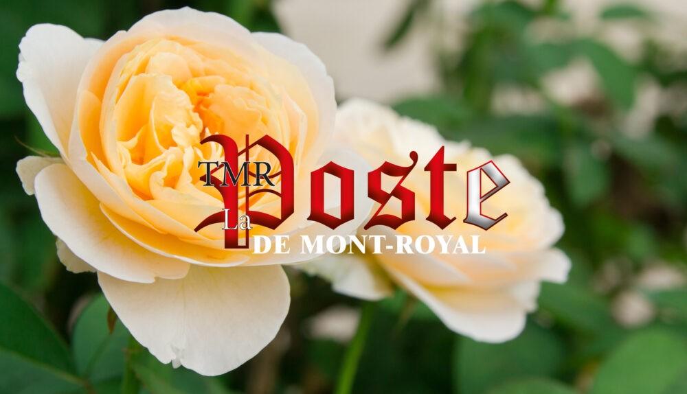 La poste de Mont-Royal | TMR Post